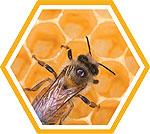 Фурнитура обработанная пчелиным воском